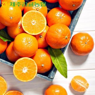 [제주감귤농협] 황금알 새콤달콤 하우스 감귤 3kg 로얄과 28~56입 GAP인증